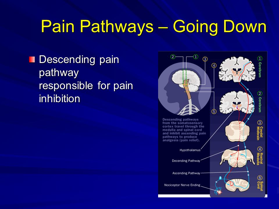 Pain Pathways – Going Down