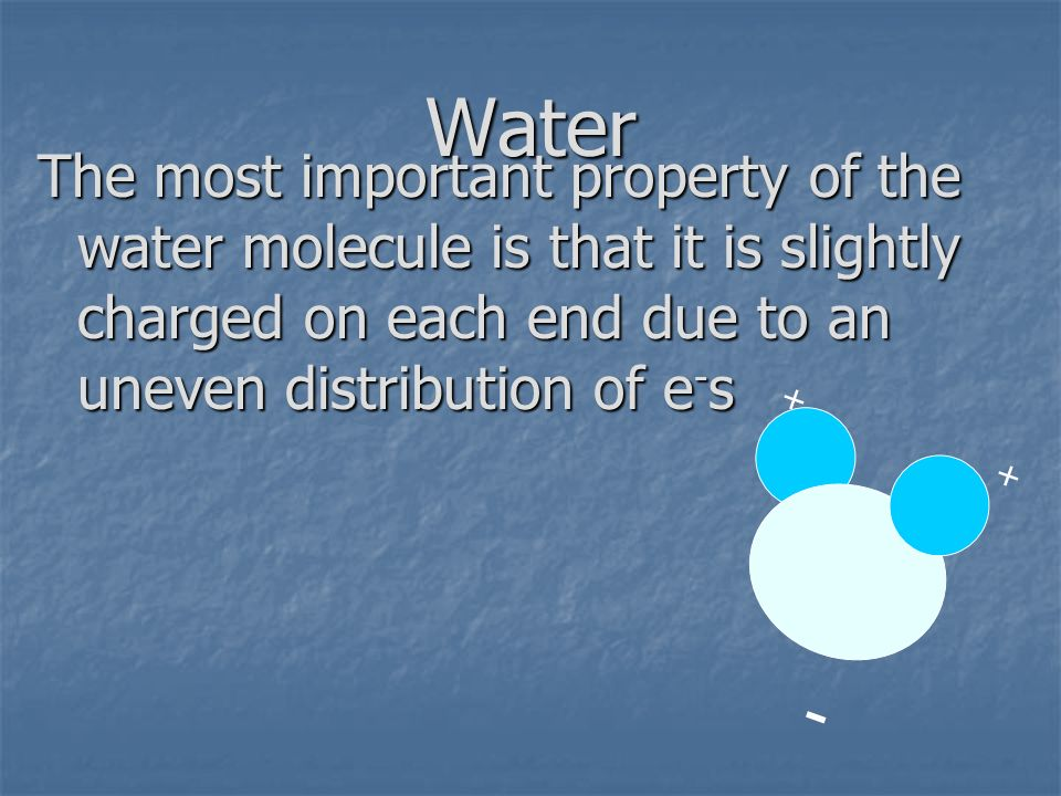 Water The most important property of the water molecule is that it is slightly charged on each end due to an uneven distribution of e-s.