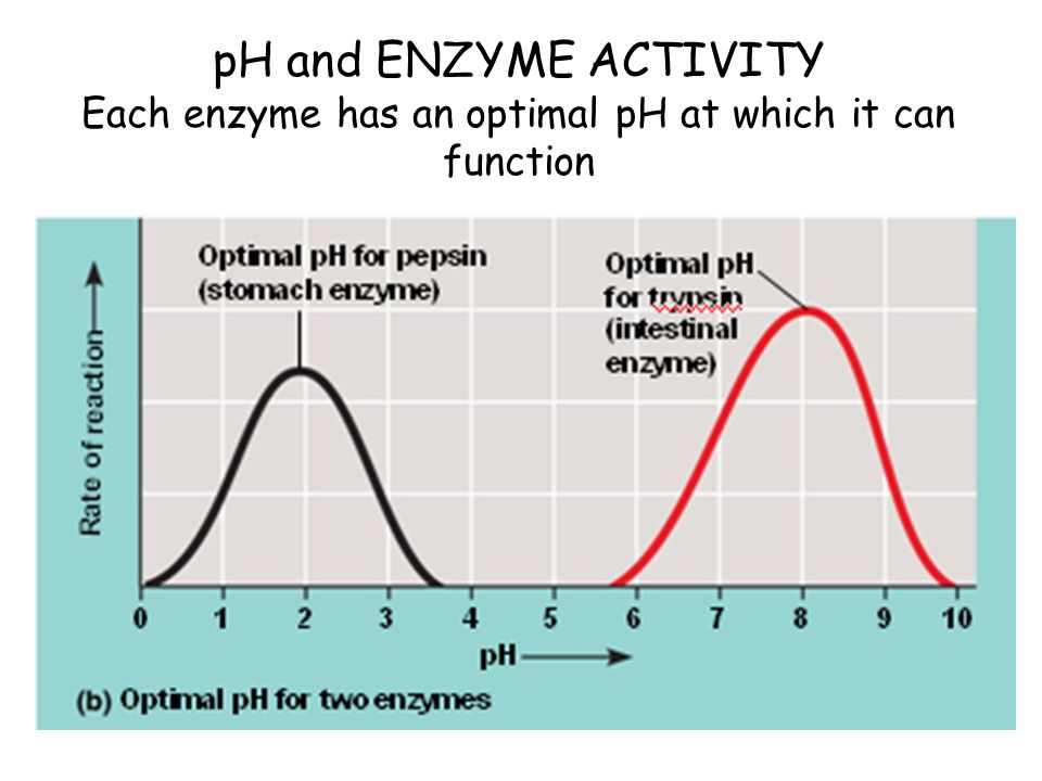 pH and ENZYME ACTIVITY Each enzyme has an optimal pH at which it can function