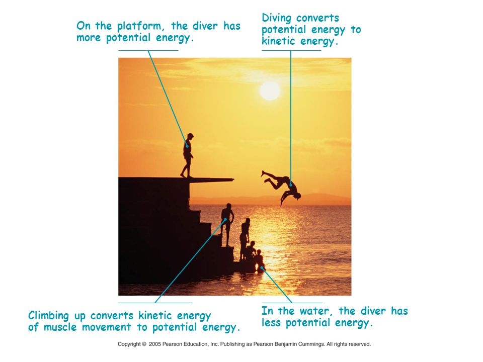 Diving converts potential energy to. kinetic energy. On the platform, the diver has. more potential energy.