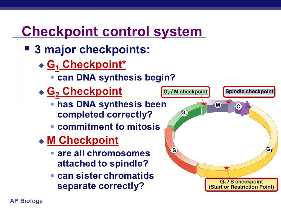 Checkpoint control system