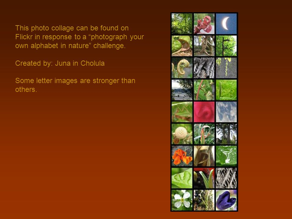 This photo collage can be found on Flickr in response to a photograph your own alphabet in nature challenge.