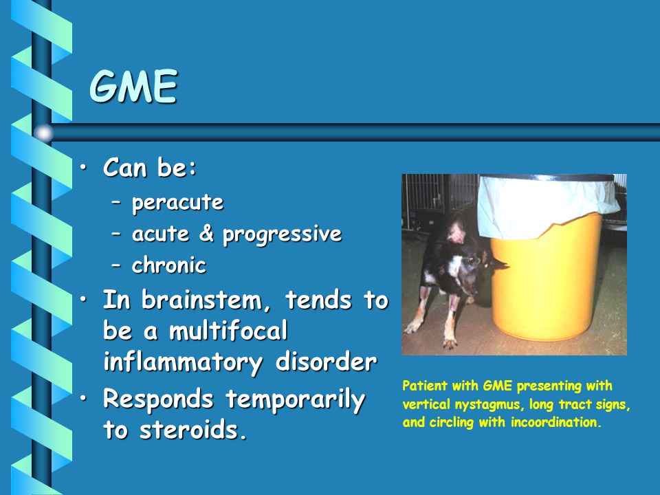 GME Can be: peracute. acute & progressive. chronic. In brainstem, tends to be a multifocal inflammatory disorder.
