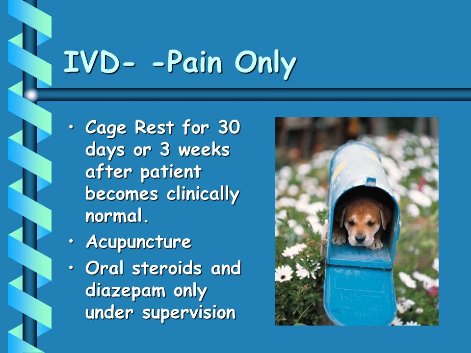IVD- -Pain Only Cage Rest for 30 days or 3 weeks after patient becomes clinically normal. Acupuncture.