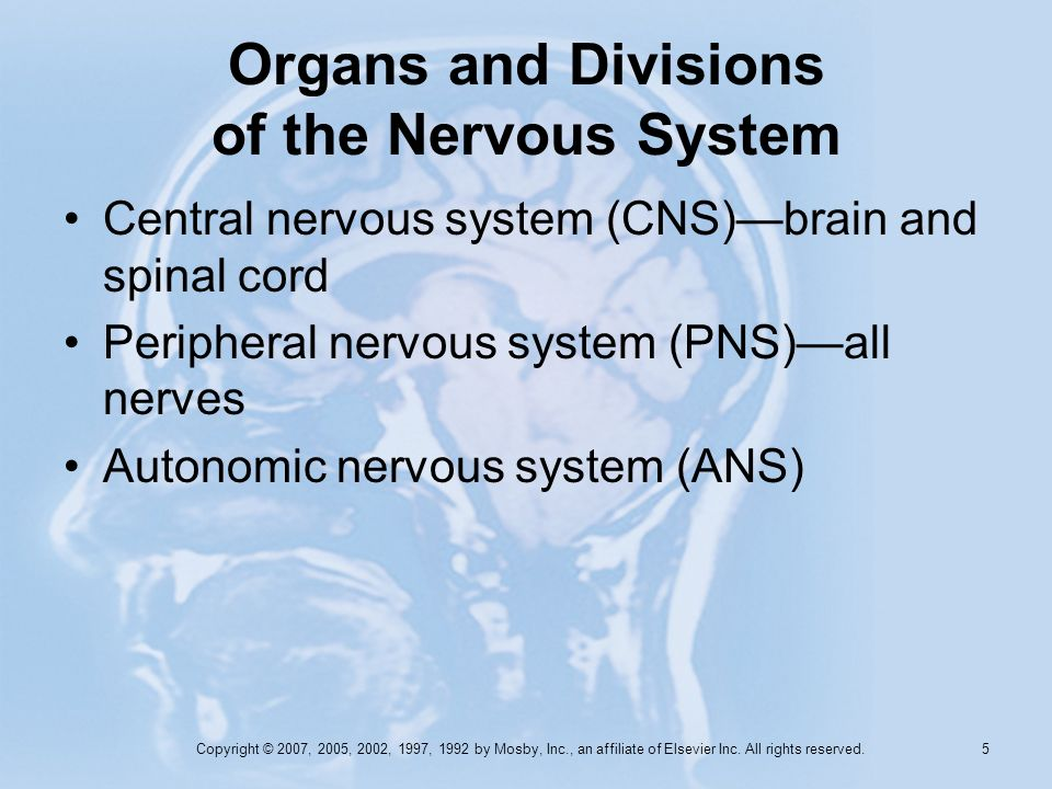 Organs and Divisions of the Nervous System