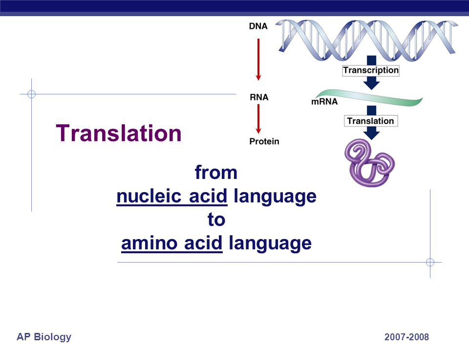 from nucleic acid language to amino acid language