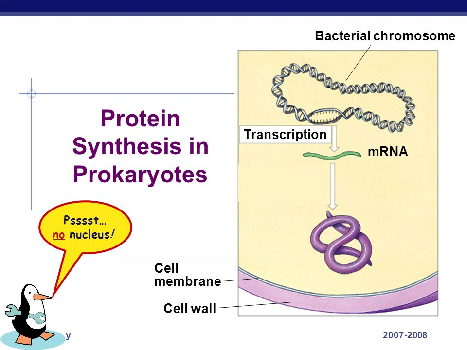 Protein Synthesis in Prokaryotes