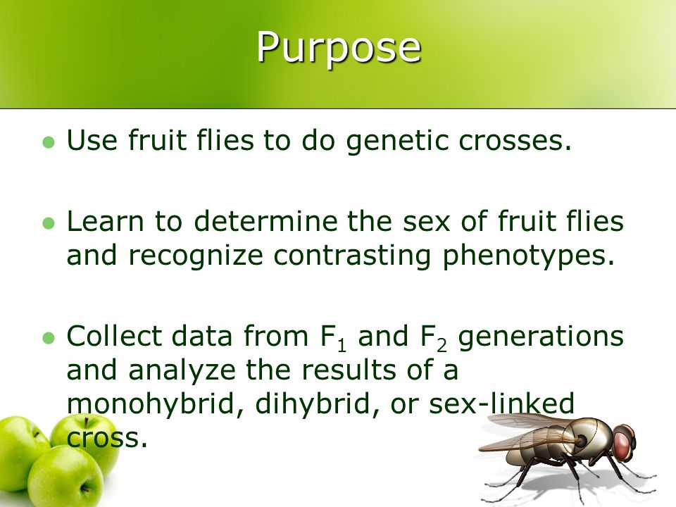 Purpose Use fruit flies to do genetic crosses.