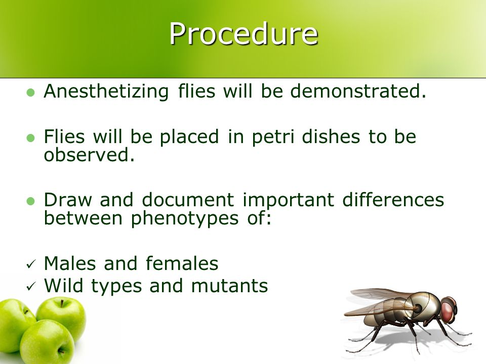 Procedure Anesthetizing flies will be demonstrated.