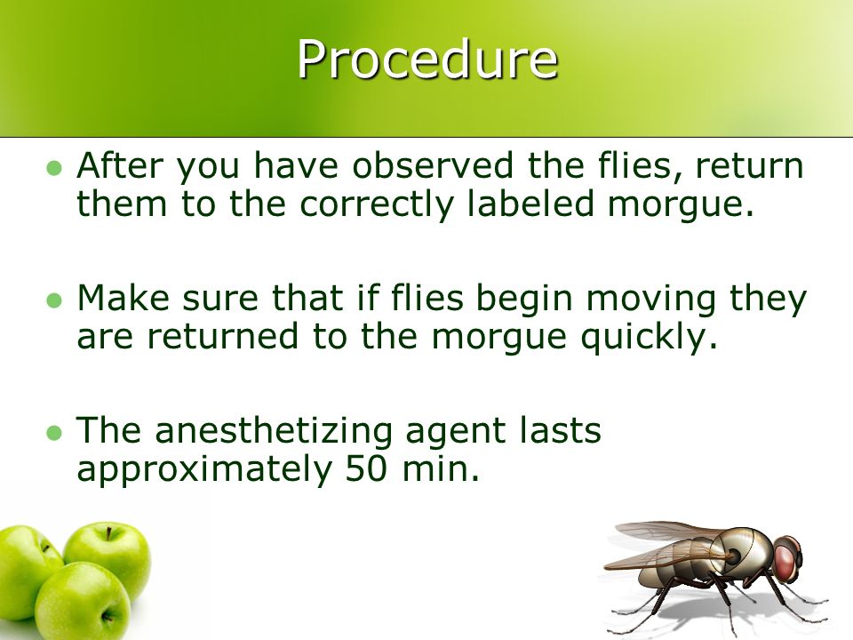 Procedure After you have observed the flies, return them to the correctly labeled morgue.