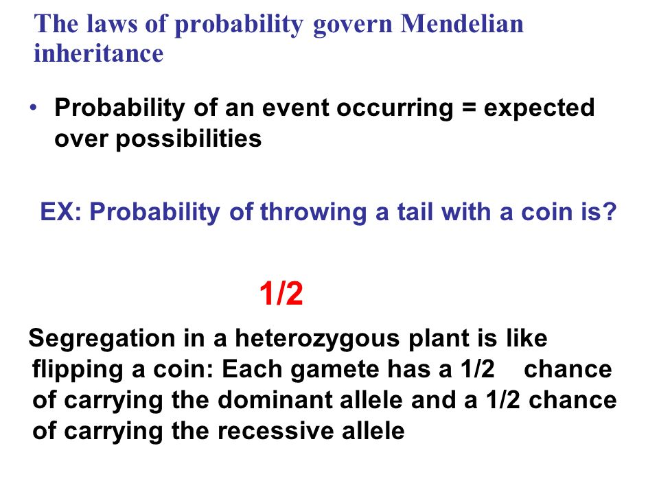 The laws of probability govern Mendelian inheritance