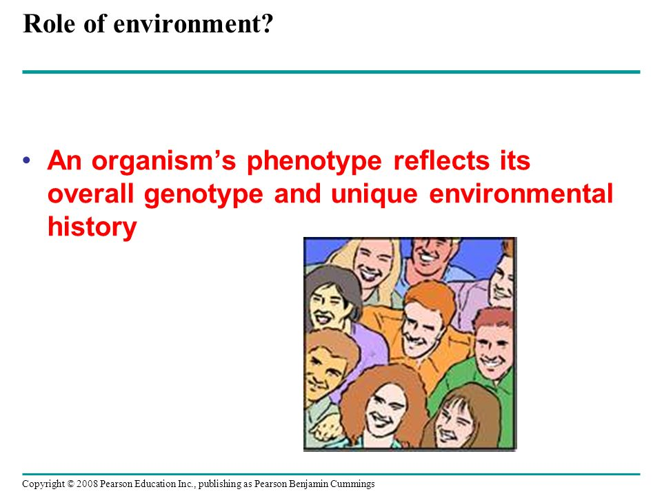 Role of environment An organism's phenotype reflects its overall genotype and unique environmental history.