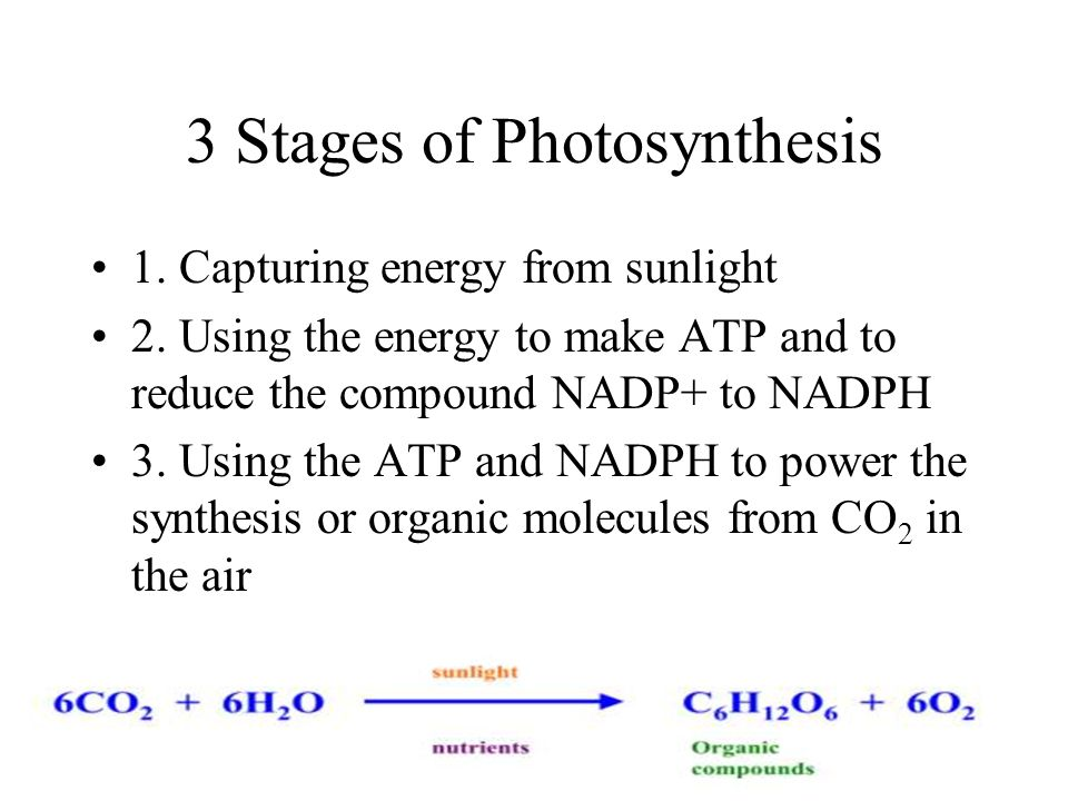 3 Stages of Photosynthesis
