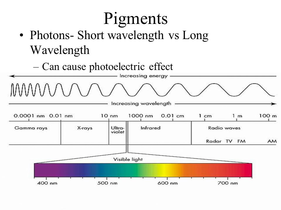 Pigments Photons- Short wavelength vs Long Wavelength