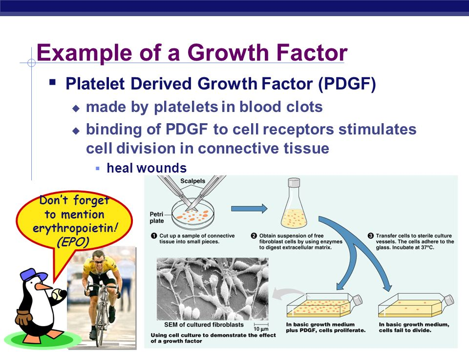 Example of a Growth Factor
