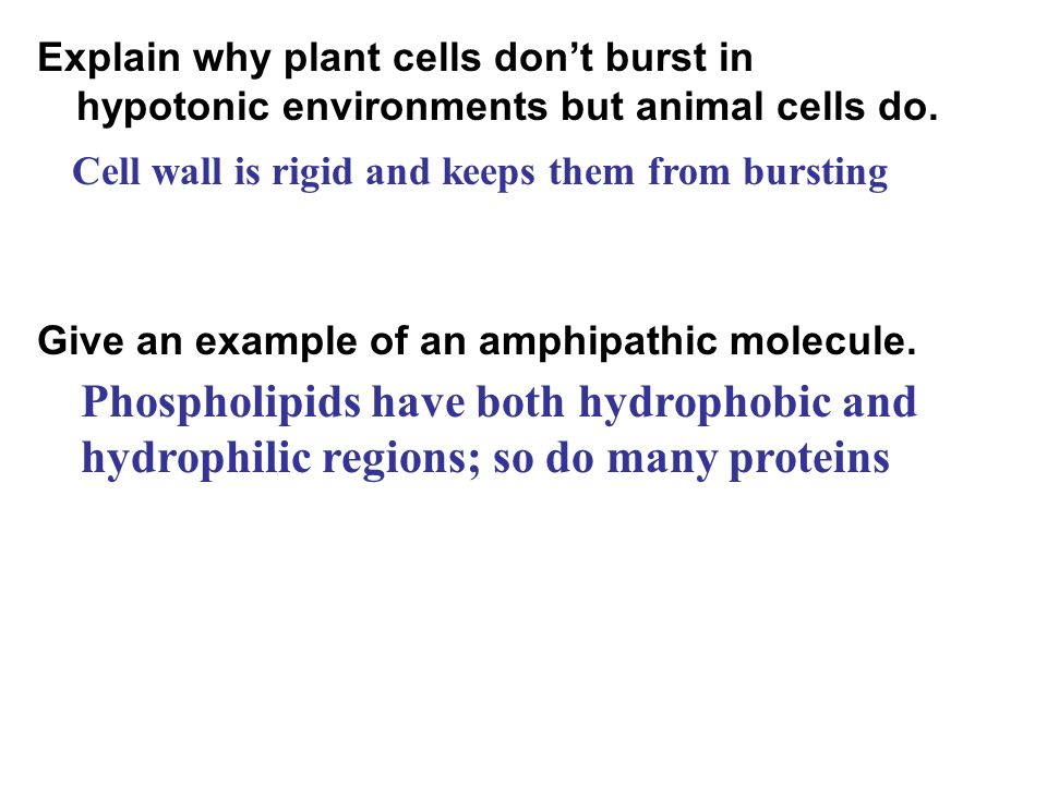 Explain why plant cells don't burst in hypotonic environments but animal cells do.