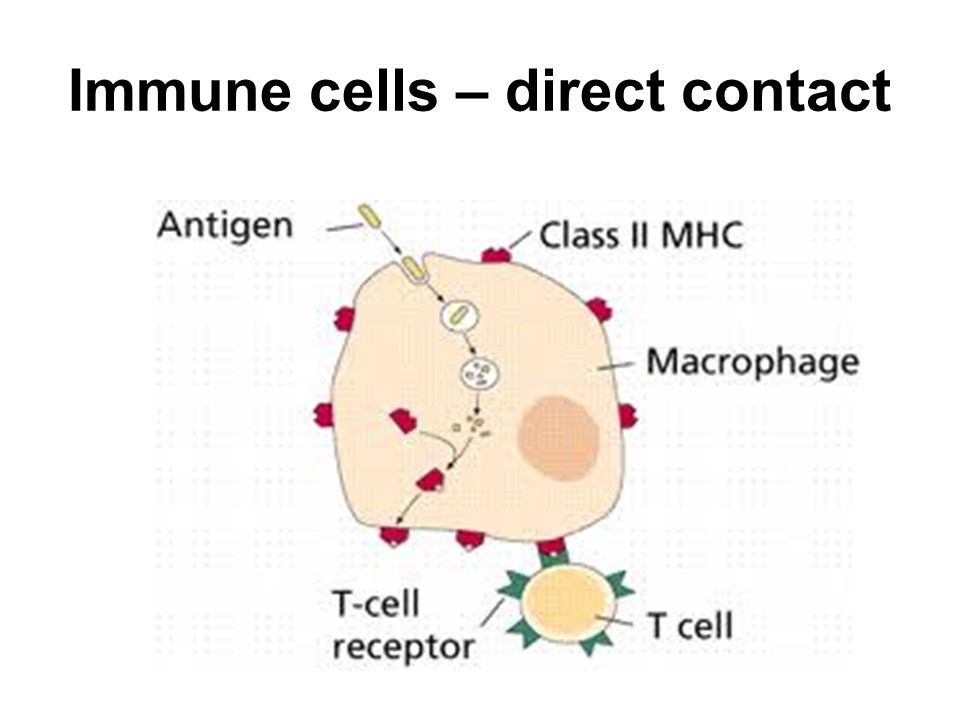 Immune cells – direct contact