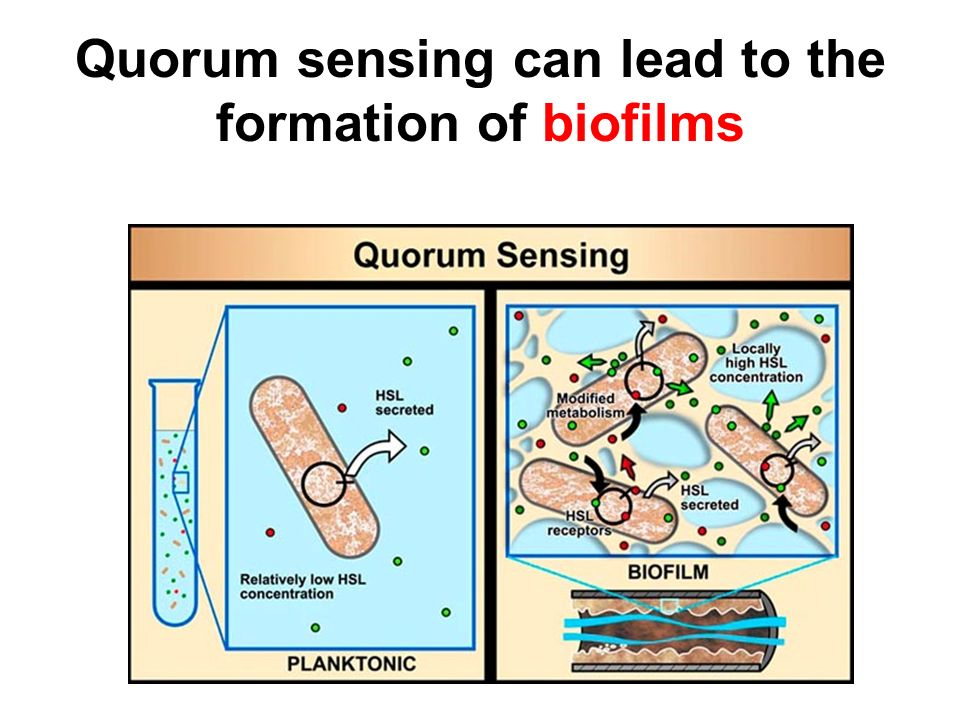 Quorum sensing can lead to the formation of biofilms