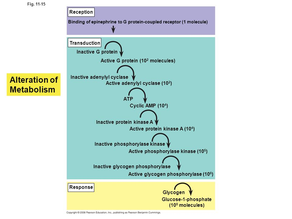Alteration of Metabolism Reception Transduction Inactive G protein