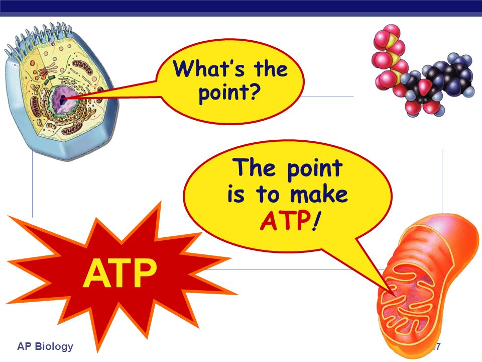 What's the point The point is to make ATP! ATP