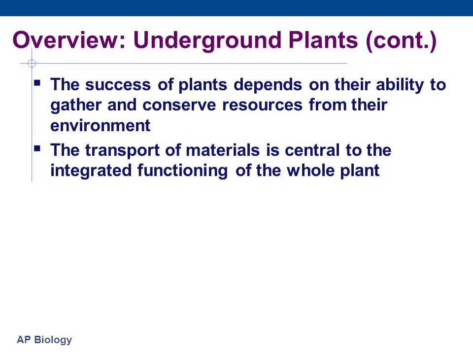 Overview: Underground Plants (cont.)