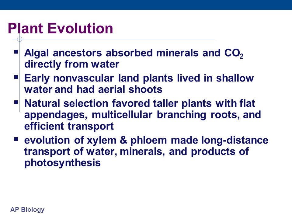 Plant Evolution Algal ancestors absorbed minerals and CO2 directly from water.