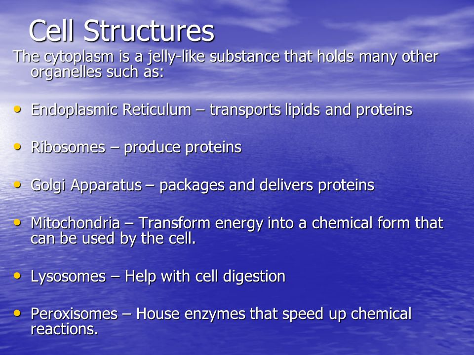 Cell Structures The cytoplasm is a jelly-like substance that holds many other organelles such as: