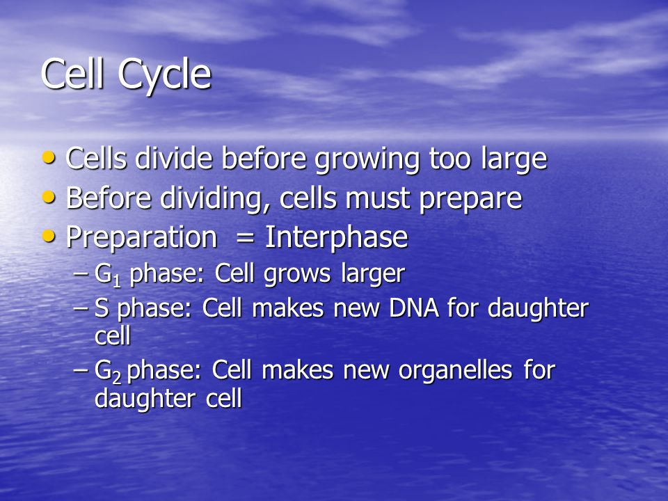 Cell Cycle Cells divide before growing too large
