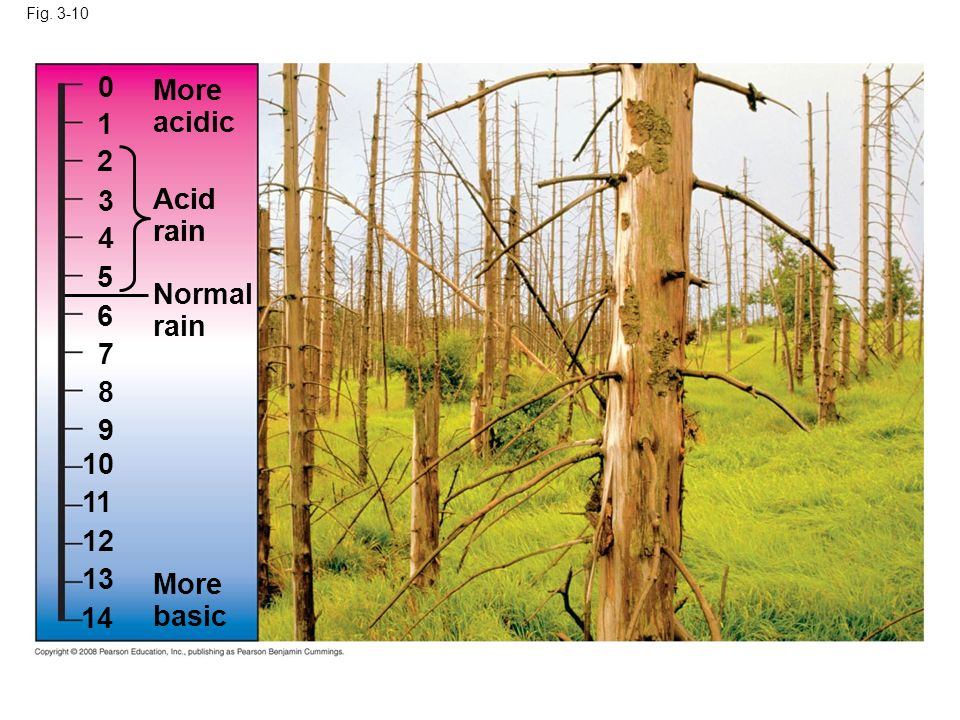 More acidic Acid rain Acid rain 4 5 Normal rain