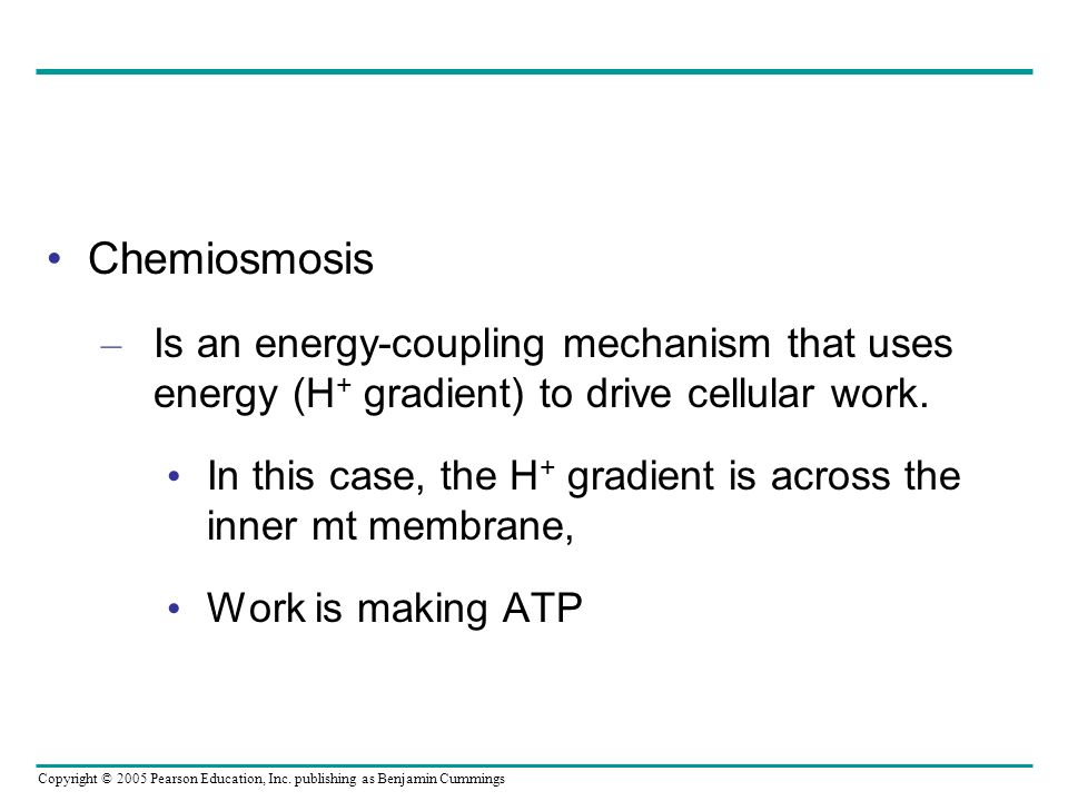Chemiosmosis Is an energy-coupling mechanism that uses energy (H+ gradient) to drive cellular work.