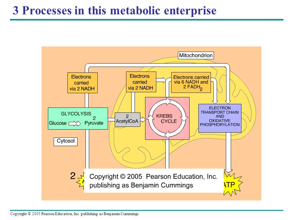 3 Processes in this metabolic enterprise