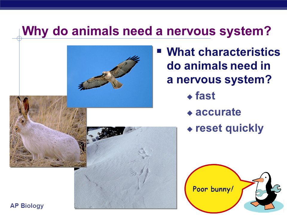 Why do animals need a nervous system