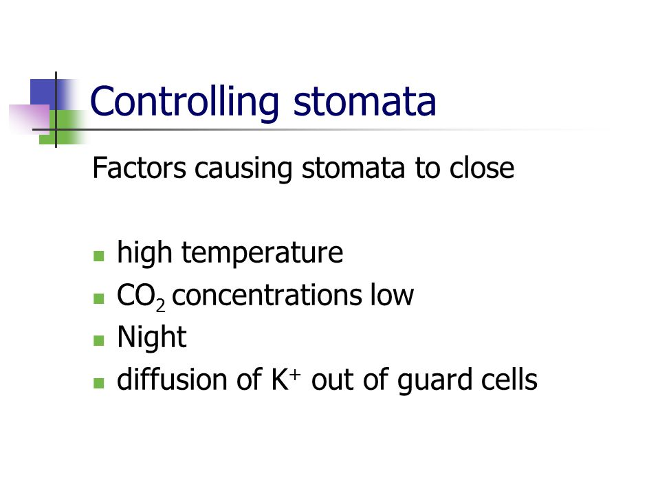Controlling stomata Factors causing stomata to close high temperature