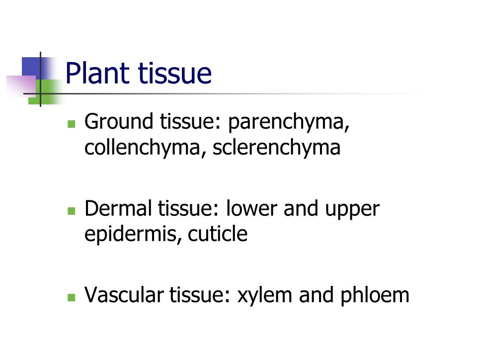 Plant tissue Ground tissue: parenchyma, collenchyma, sclerenchyma