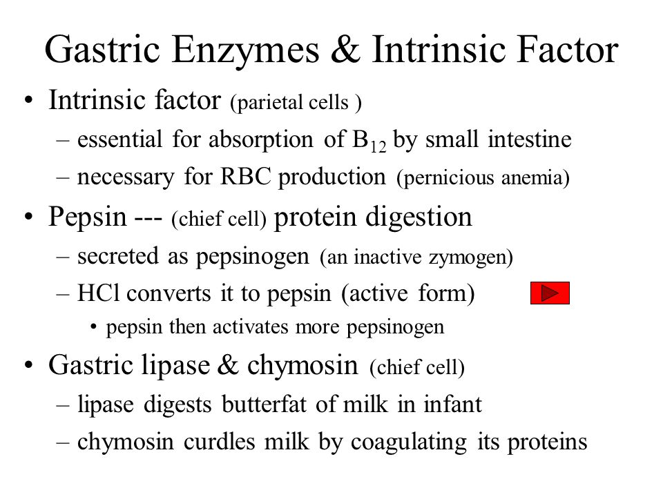 Gastric Enzymes & Intrinsic Factor