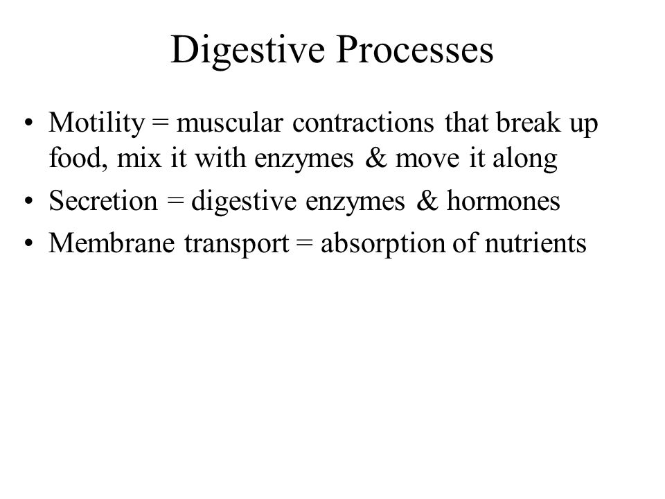 Digestive Processes Motility = muscular contractions that break up food, mix it with enzymes & move it along.