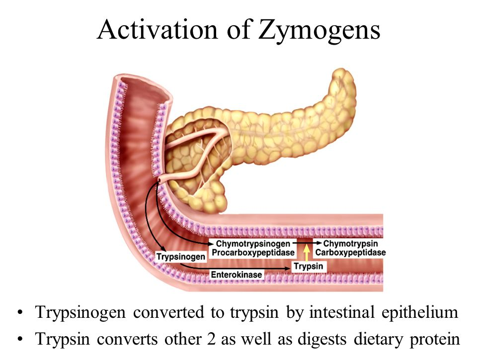 Activation of Zymogens