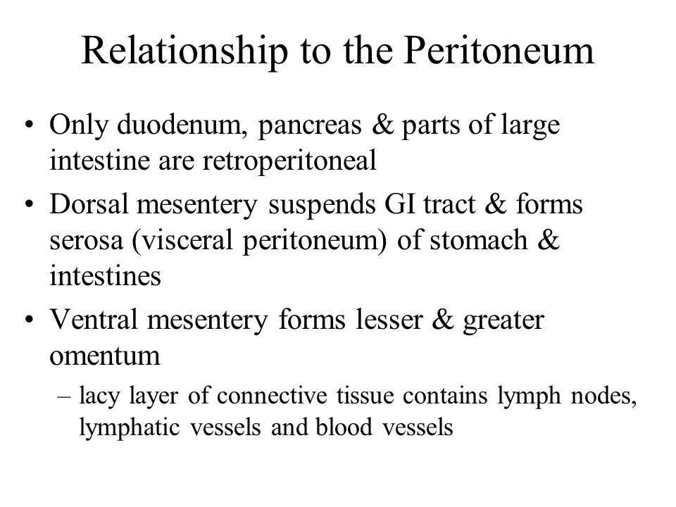 Relationship to the Peritoneum