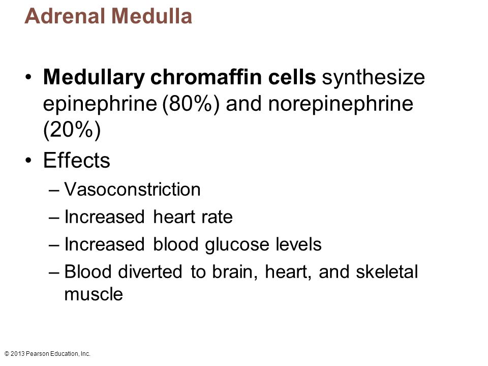 Adrenal Medulla Medullary chromaffin cells synthesize epinephrine (80%) and norepinephrine (20%) Effects.