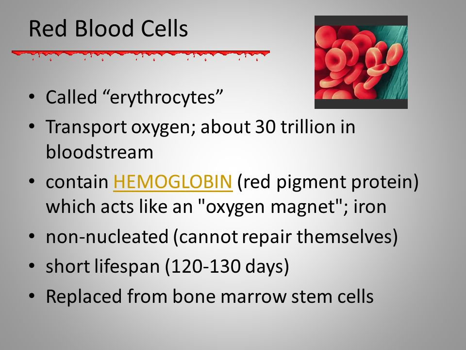 Red Blood Cells Called erythrocytes
