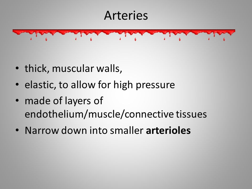 Arteries thick, muscular walls, elastic, to allow for high pressure