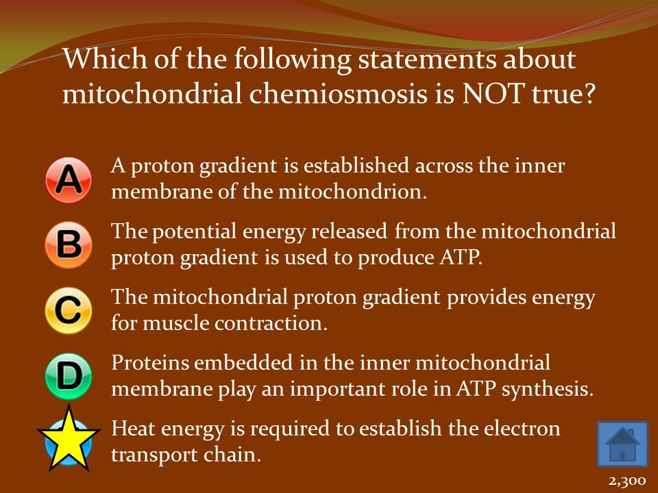 Which of the following statements about mitochondrial chemiosmosis is NOT true