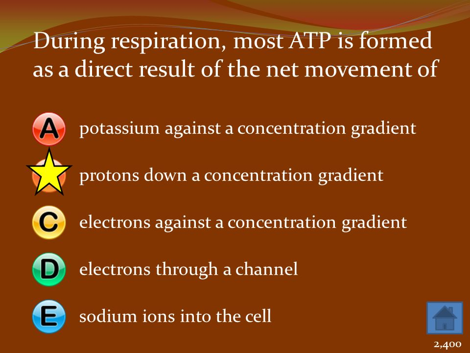 During respiration, most ATP is formed as a direct result of the net movement of
