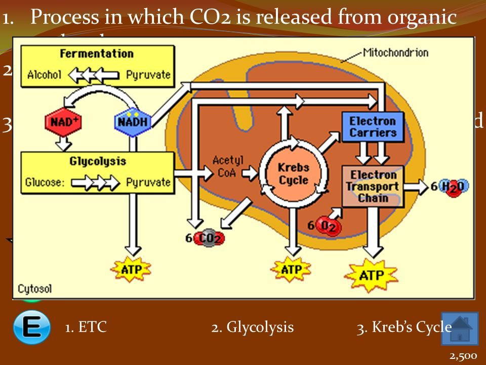 Process in which CO2 is released from organic molecules