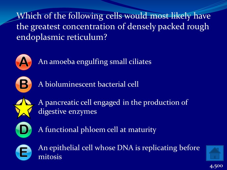 Which of the following cells would most likely have the greatest concentration of densely packed rough endoplasmic reticulum