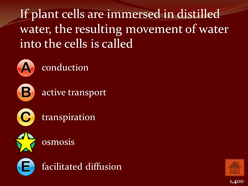 If plant cells are immersed in distilled water, the resulting movement of water into the cells is called