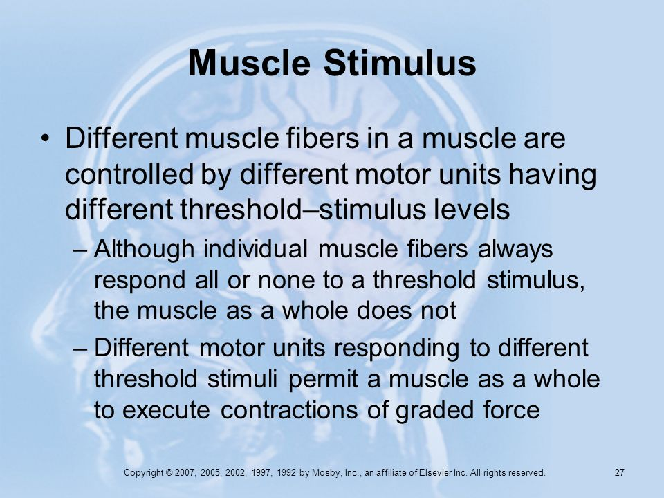 Muscle Stimulus Different muscle fibers in a muscle are controlled by different motor units having different threshold–stimulus levels.