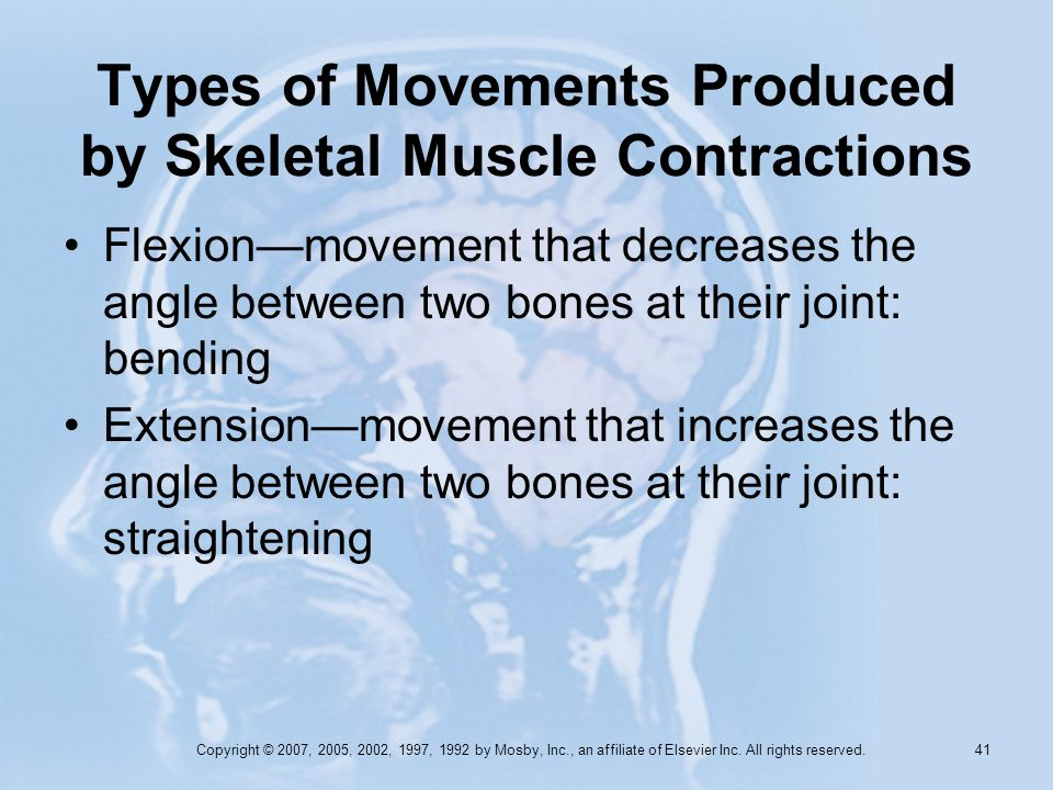 Types of Movements Produced by Skeletal Muscle Contractions