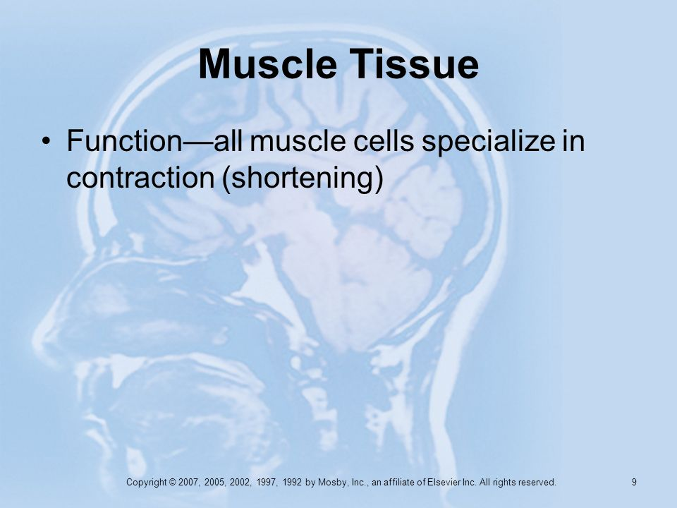 Muscle Tissue Function—all muscle cells specialize in contraction (shortening)