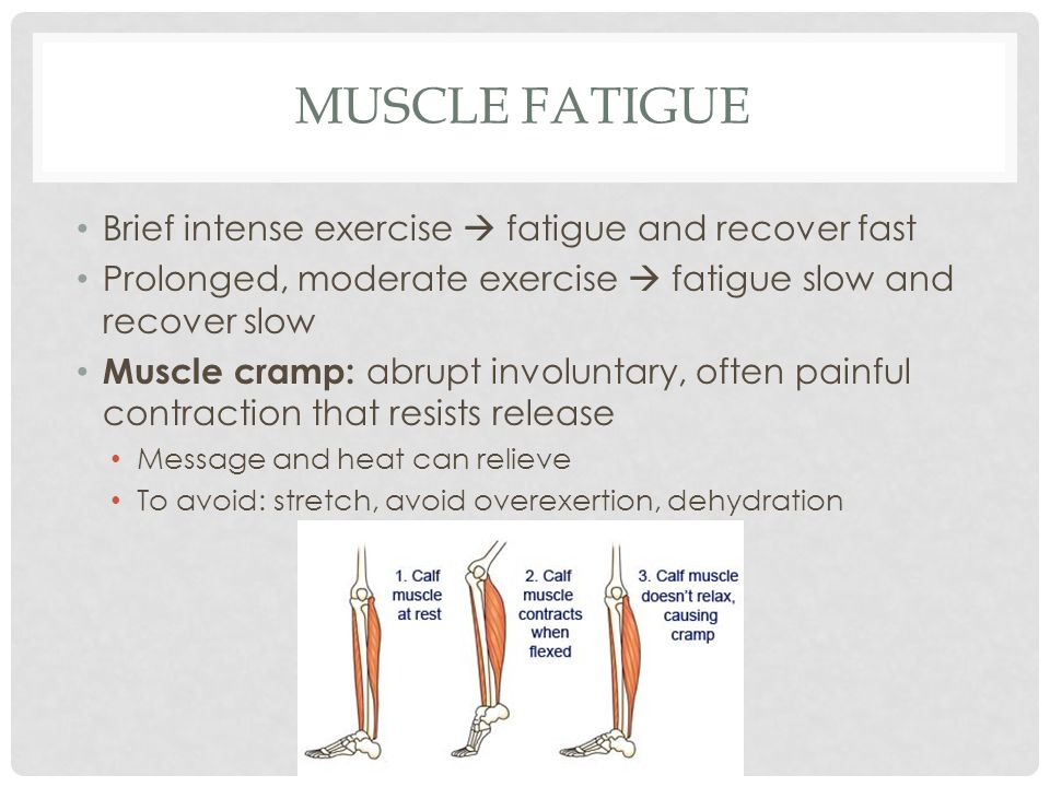 Muscle Fatigue Brief intense exercise  fatigue and recover fast